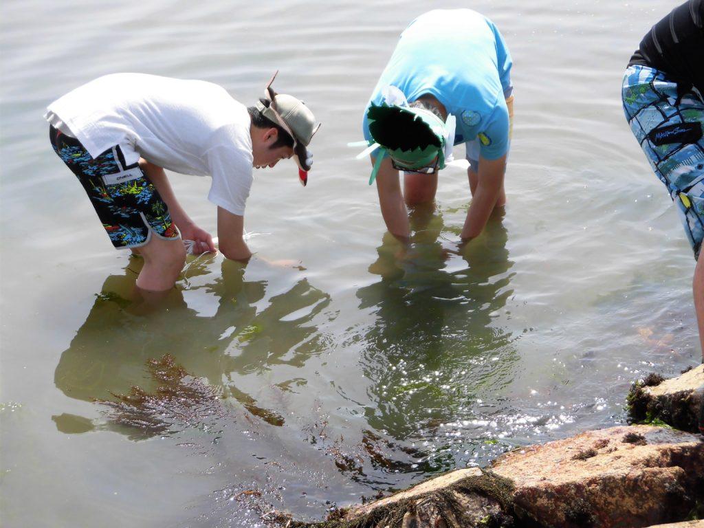 阪南市の海洋教育 アマモの再生活動 種植え